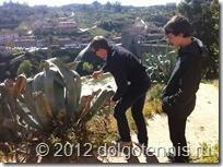 Миша и Никита знакомятся с толедскими кактусами.