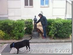 Так в Барселоне собаки пьют воду.