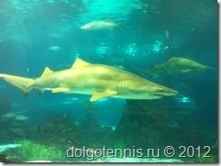 Эта акула упорно преследовала нас в Аквариуме Барселоны (L'AQUARIUM DE BARCELONA)